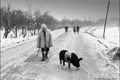 4-Om-Porc-1978